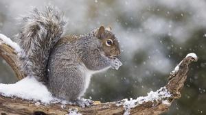Rodent Snowfall Squirrel Wildlife Winter 5472x2781 Wallpaper