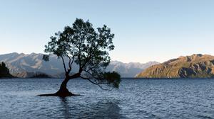Lake Lonely Tree Mountain Nature New Zealand Tree 4000x2118 wallpaper