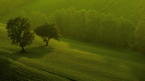 Earth Forest 2048x1320 Wallpaper