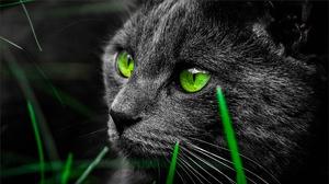 Cat Green Eyes 2048x1152 Wallpaper