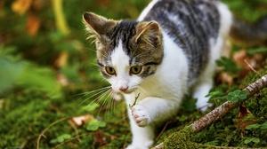 Baby Animal Cat Kitten Moss Pet 2560x1707 Wallpaper