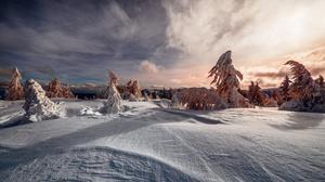 Snow Sunset Fir Tree 2000x1334 Wallpaper