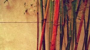 Bamboo 1920x1200 Wallpaper