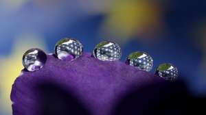 Flower Macro Petal Water Water Drop 3338x2336 wallpaper