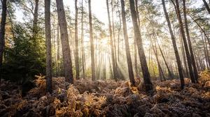 Fall Fern Forest Nature Sunbeam 6000x4000 Wallpaper