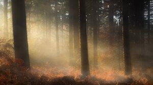 Fern Forest Sunlight Wood 5000x3482 Wallpaper