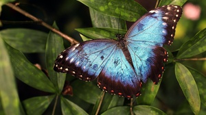 Butterfly Insect Macro Wildlife Wings 3200x2133 wallpaper