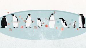 Bird Cartoon Funny Humor Penguin 2560x1440 Wallpaper