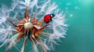Dandelion Insect Ladybug Macro 2048x1407 Wallpaper