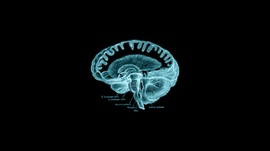 Brain Anatomy Dark 1650x1080 Wallpaper