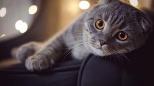 Cat Pet 4424x2949 wallpaper