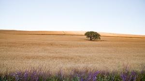 Field Nature Summer Tree 2048x1152 Wallpaper
