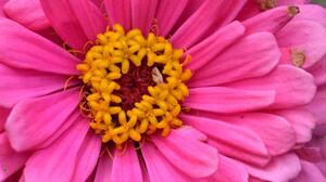 Close Up Earth Flower Gerbera Pink Flower 3000x2000 Wallpaper