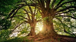 Forest Greenery Sunshine Tree 3000x1997 Wallpaper