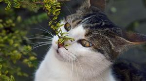 Cat Pet 3840x2400 wallpaper