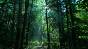 Forest Greenery Nature Path Sunbeam 3840x2160 Wallpaper
