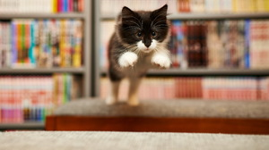 Cat Kitten Jump Blur Baby Animal 2560x1600 Wallpaper
