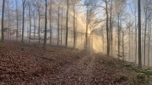 Fall Fog Foliage Forest Path Trunk 3840x2160 Wallpaper