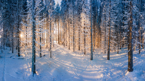 Nature Snow Forest Trees Winter Finland Sunrise Outdoors Cold Ice Plants Sunlight 3072x1519 Wallpaper