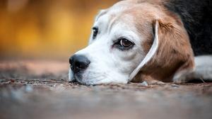 Dog Pet 4500x3000 wallpaper
