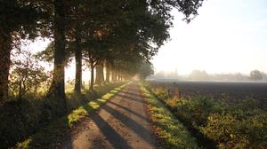 Nature Path Morning Fall 3840x2160 Wallpaper