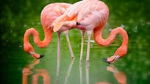 Bird Flamingo Reflection Wildlife 2048x1365 wallpaper