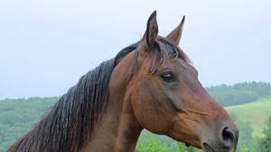 Animal Horse 1920x1440 Wallpaper