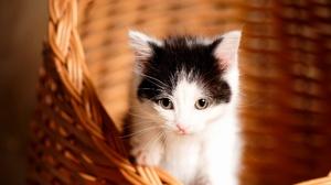 Baby Animal Cat Kitten Pet 2048x1463 Wallpaper