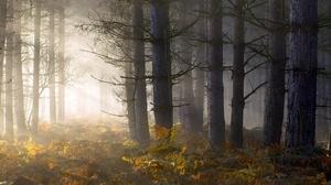 Fall Fern Forest Sunbeam 2048x1365 Wallpaper
