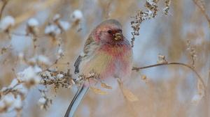 Bird Wildlife 2560x1706 Wallpaper
