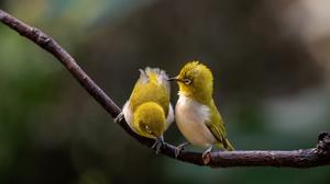 Bird Wildlife 3840x2160 Wallpaper