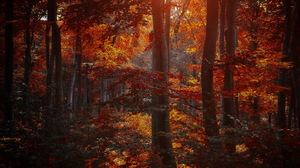 Earth Fall Foliage Forest Sunshine Tree 1920x1200 Wallpaper