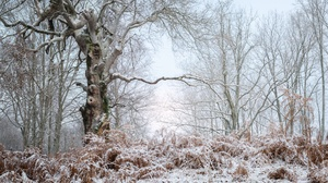 Nature Winter Cold Trees Ice Outdoors 3840x2160 Wallpaper