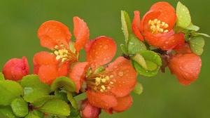 Blossom Branch Macro Raindrops Spring 2048x1360 Wallpaper
