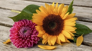 Dahlia Sunflower 1920x1280 Wallpaper