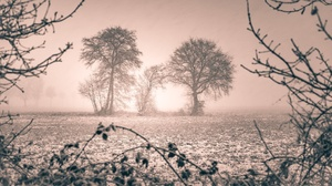 Nature Landscape Winter Cold Ice Frost Trees Sunlight Field 2048x1152 Wallpaper
