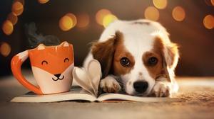 Bokeh Cup Dog Pet 2048x1365 wallpaper
