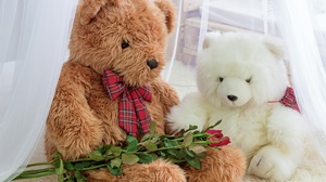 Stuffed Animal Teddy Bear 4956x3456 Wallpaper