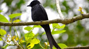 Bird Crow 5120x2880 Wallpaper