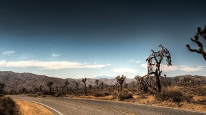 Road Park Tree Desert Elk 2560x1600 Wallpaper