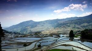 Grass Rice Paddy Landscape Hills Rice Fields 2560x1600 Wallpaper