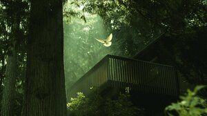Nature Fowl Trees Forest Balcony Sunlight 2048x1152 Wallpaper