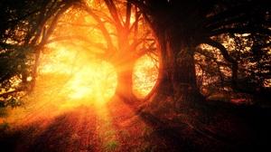 Nature Sunbeam Tree 4439x2961 Wallpaper