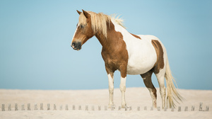 Animal Horse 1920x1200 wallpaper