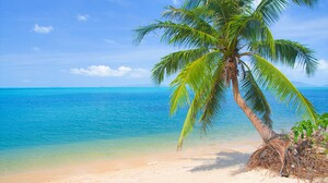 Beach Horizon Ocean Palm Tree Sea Tropical Turquoise 4000x2667 Wallpaper