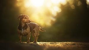 Dog Pet Bokeh 2048x1200 Wallpaper