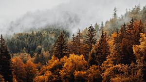 Trees Forest Austria Photography Fall Mist 1920x2880 Wallpaper