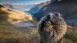 Animal Marmot 3000x1687 Wallpaper