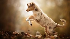 Baby Animal Depth Of Field Dog Pet Puppy 2048x1365 Wallpaper