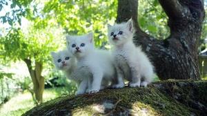 Kitten Baby Animal Pet 2560x1707 Wallpaper
